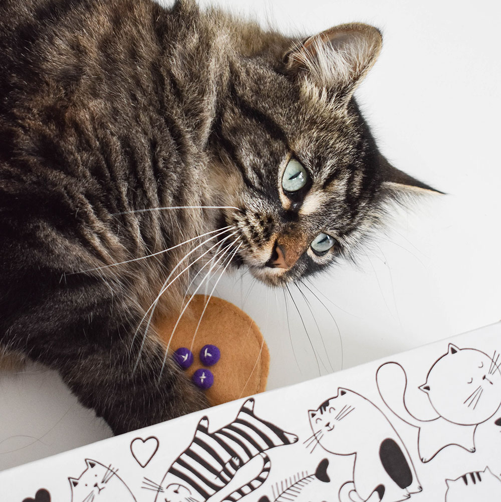 Product Photoshoot for Cattitude Subscription Box
